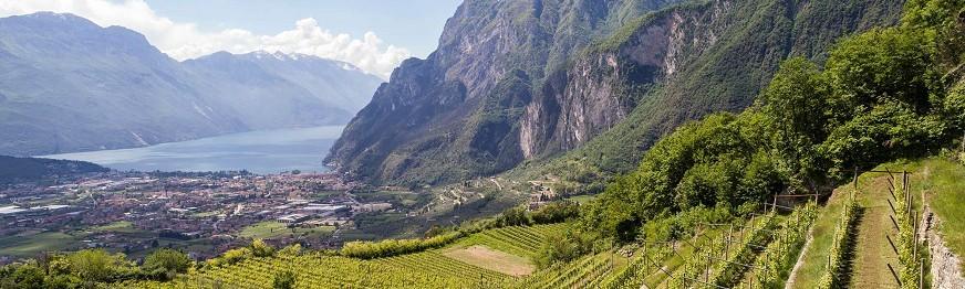 Comai - Azienda Agricola - Riva del Garda